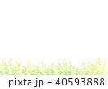植物 40593888