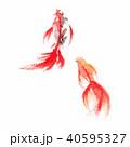 金魚/水彩画 40595327