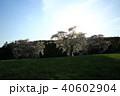 桜 木 草原の写真 40602904