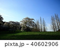 桜 木 草原の写真 40602906