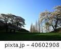 桜 木 草原の写真 40602908