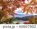 富士山 紅葉 秋の写真 40607902