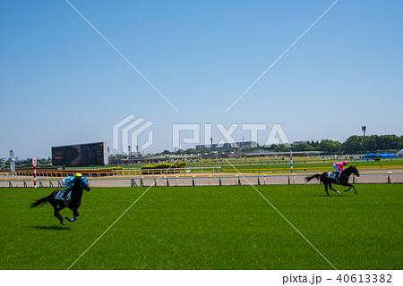 東京競馬場 コース フィニッシュ地点 競走馬 40613382