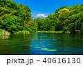 柿田川 富士山 新緑の写真 40616130