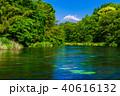 柿田川 富士山 新緑の写真 40616132