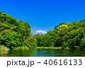 柿田川 富士山 新緑の写真 40616133