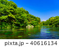 柿田川 富士山 新緑の写真 40616134