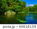 柿田川 富士山 新緑の写真 40616139