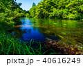 柿田川 新緑 川の写真 40616249