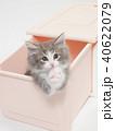 お願いをするノルウェージァンフォレストキァットの仔猫 40622079