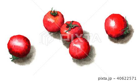 水彩で描いたプチトマト 40622571