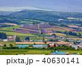 北海道 ラベンダー畑 風景の写真 40630141