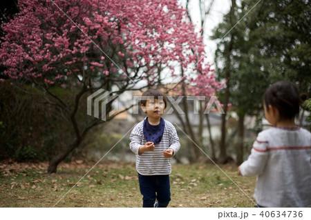 2歳児の男子/梅 40634736