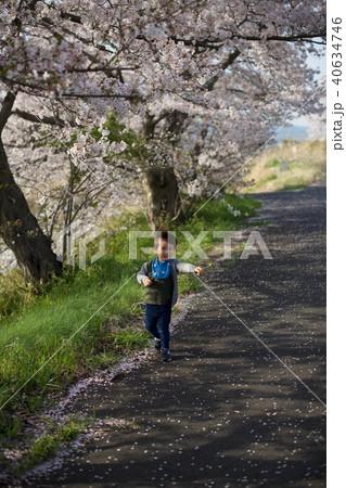 2歳児の男子/お花見でタンポポを持つ 40634746