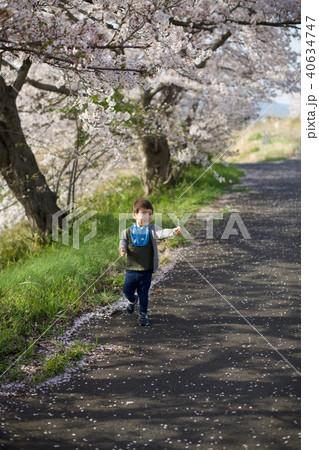 2歳児の男子/お花見でタンポポを持つ 40634747