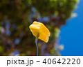 パイナップル 40642220