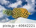 パイナップル 40642221