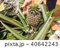 パイナップル畑 40642243