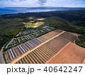 パイナップル畑 40642247