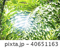 ボルネオ島ジャングルのイメージフォト 40651163
