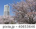 桜 横浜ランドマークタワー 横浜の写真 40653646