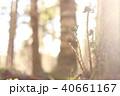 シダの森 40661167