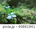 コケの森 40661941