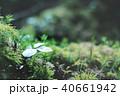 コケの森 40661942