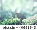 コケの森 40661943