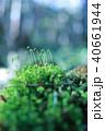 コケの森 40661944