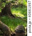 木洩れ陽と切り株 40661997