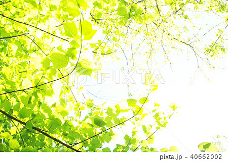グリーンの背景 40662002