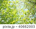 グリーンの背景 40662003