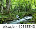 木谷沢渓流 40665543