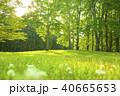 公園 芝生 森の写真 40665653