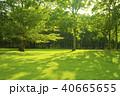 公園 芝生 森の写真 40665655