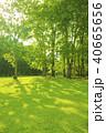 公園 芝生 森の写真 40665656