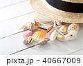 貝殻 40667009