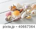 貝殻 40667364