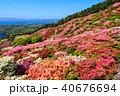 長串山つつじまつり 長串山公園 つつじの写真 40676694