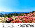 長串山つつじまつり 長串山公園 つつじの写真 40676700
