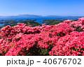 長串山つつじまつり 長串山公園 つつじの写真 40676702