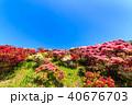 長串山つつじまつり 長串山 長串山公園の写真 40676703