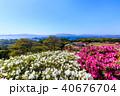 長串山つつじまつり 長串山公園 つつじの写真 40676704