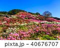 長串山つつじまつり 長串山公園 つつじの写真 40676707