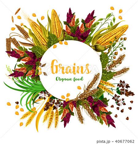 Vector grains fresh organic food poster 40677062