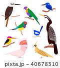 鳥 エキゾチック セットのイラスト 40678310