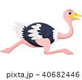 鳥 だちょう オストリッチのイラスト 40682446