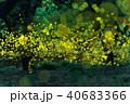 ヒメボタル ホタル 乱舞の写真 40683366