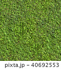 Coniferous evergreen tree with small leaves. 40692553